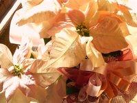 2011 クリスマス 001.jpg